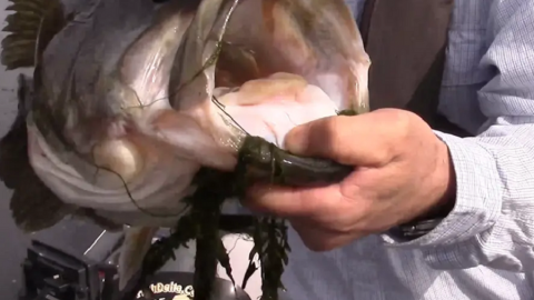 TFIT Tip #3 Targeting Bluegill Beds with Bobby Barrack